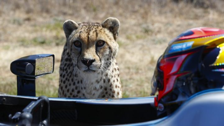 FORMULA E CAR VS CHEETAH